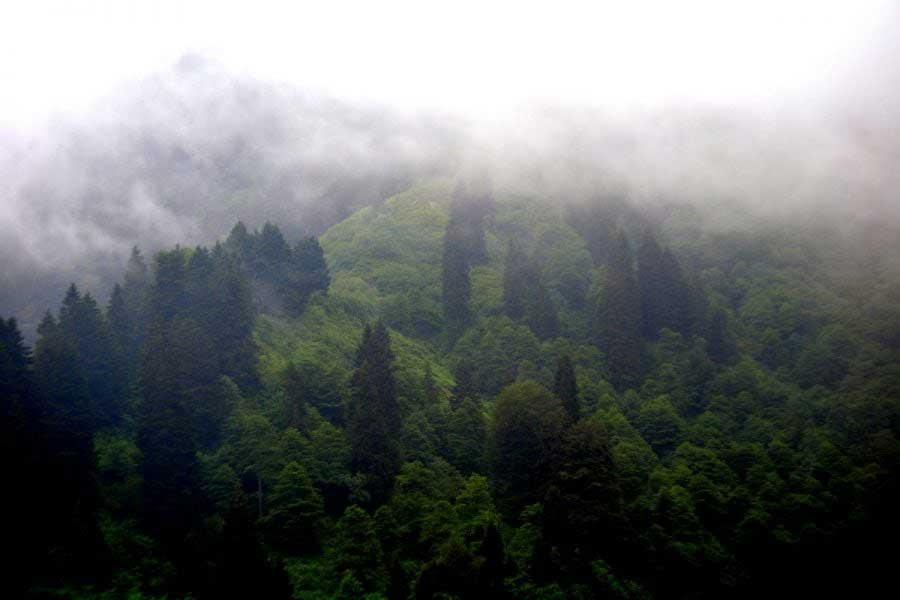 Ayder yaylası sis manzarası, Ayder Yaylası fotoğrafları - Ayder Plateau photos