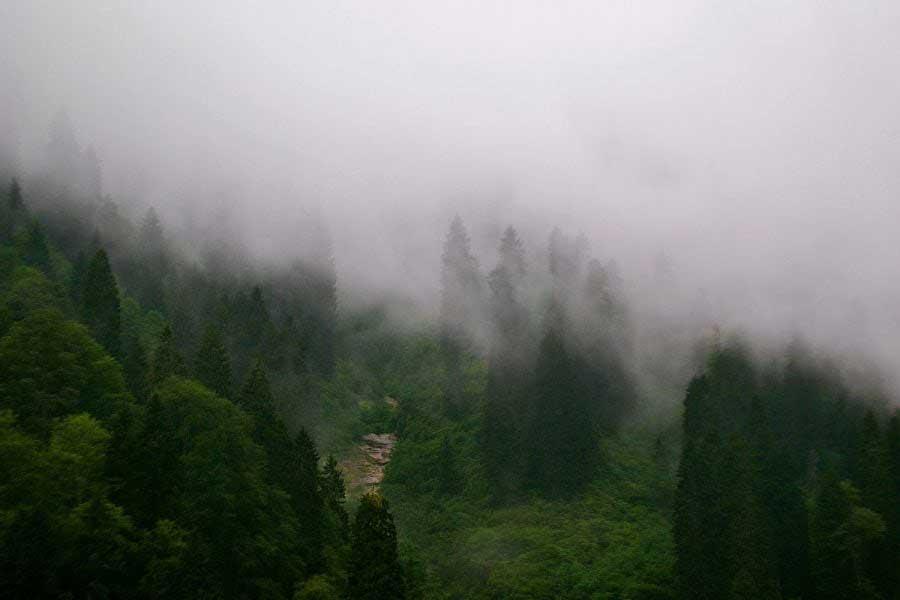 Karadeniz bölgesi Ayder yaylası sis manzarası, Ayder fotoğrafları - Ayder Plateau photos