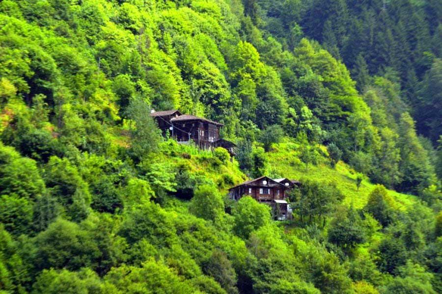 Ayder yaylası yolu ahşap evler Rize Çamlıhemşin, Ayder Yaylası fotoğrafları - timber houses embraced by green, Ayder Plateau photos