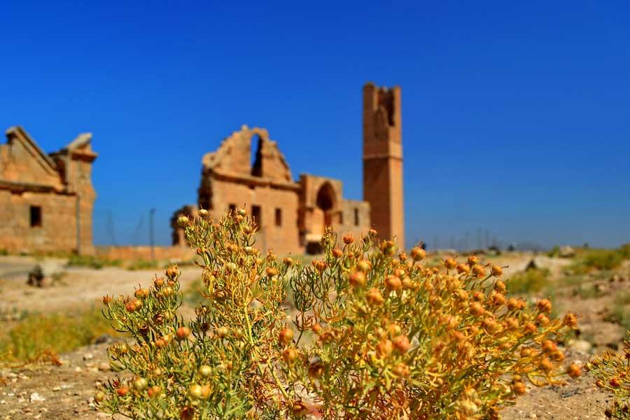 Güneydoğu Şanlıurfa Harran fotoğrafları - Southeastern Anatolia Region Harran plains photos