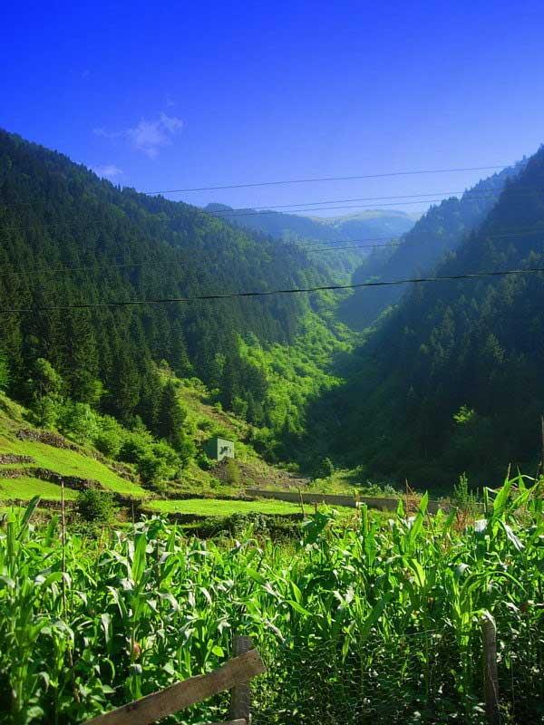 Uzungöl çevresindeki dağlar, Uzungöl fotoğrafları - mountains and various tones of green, Uzungöl photos