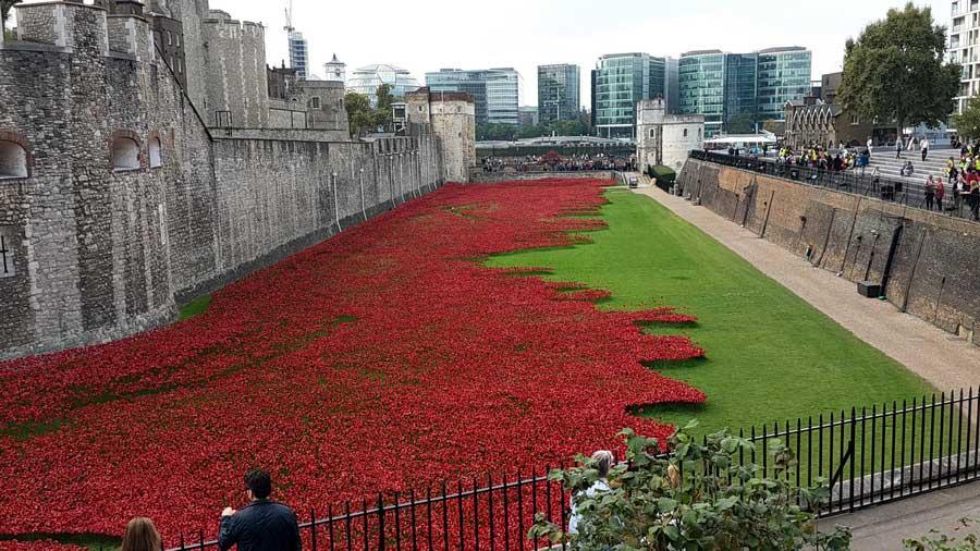 İngiltere güzergahı Birinci dünya savaşında ölen askerler anısına yapılmış seramik gelincikler ve londra kalesi - England route