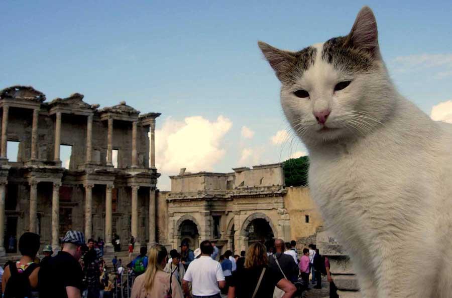 Ankara Kaş güzergahı rehber lazim mi abla bir selfie çekileydik beraber - Ankara Kas route photos guides and guardians of Ephesus