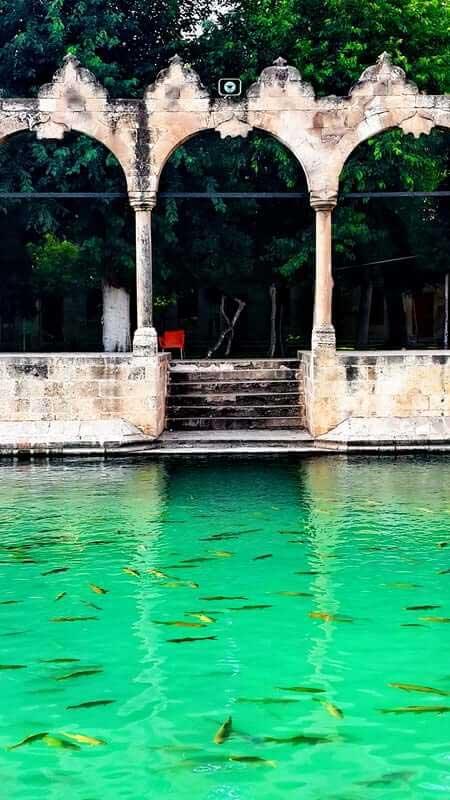 Güneydoğu Anadolu güzergahı Şanlıurfa Balıklı göl - Southeastern Anatolia route grief in Şanlıurfa fish lake