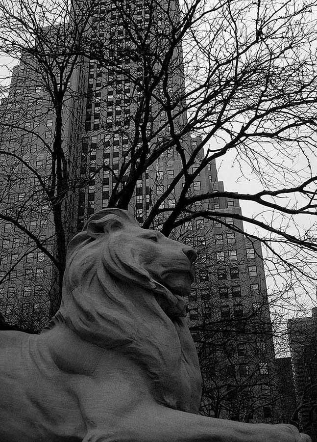 New York Halk Kütüphanesi fotoğrafları bilgiyi koruyan aslan - New York City Public Library Lion guarding Knowledge