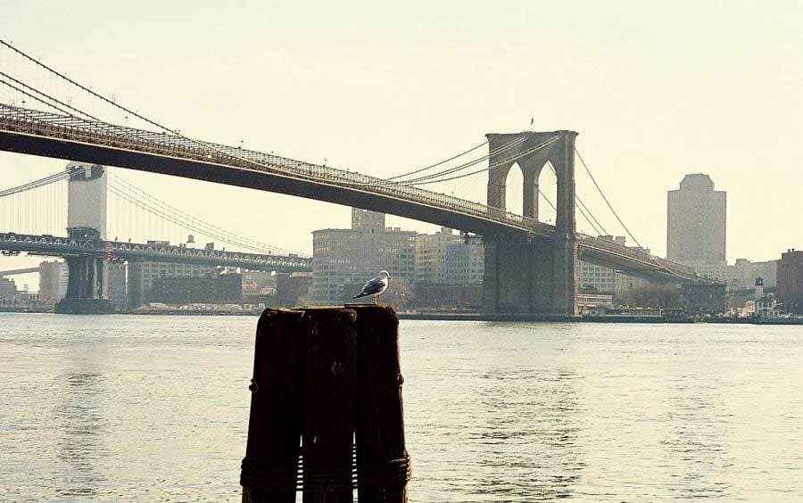 New York fotoğrafları Brooklyn Köprüsü - New York City photos Brooklyn Bridge and the seagull