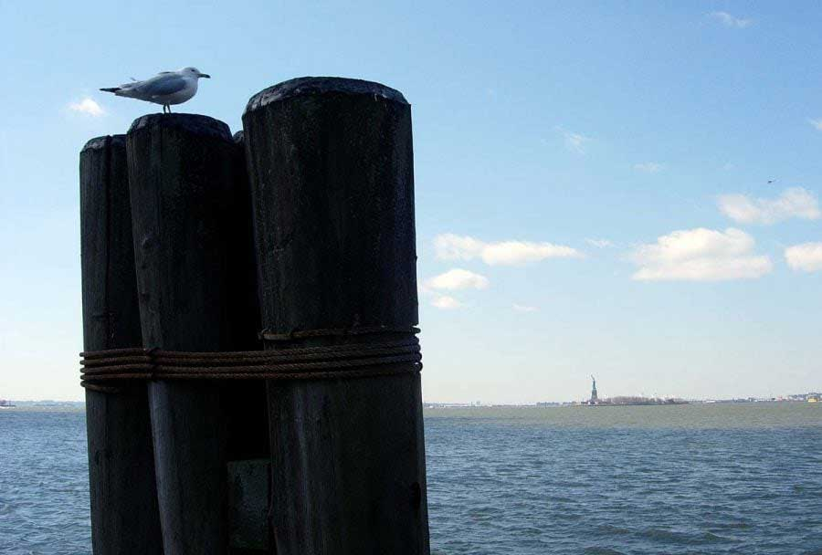 New York fotoğrafları Hürriyet heykeline bakan martı - New York City photos seagull looking at the Statue of Liberty