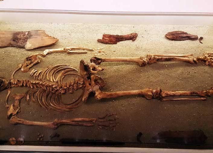 Tekirdağ Arkeoloji ve Etnografya Müzesi Harekattepe tümülüsü kral iskeleti - Tekirdağ Archeology and Ethnography Museum king skeleton, the tumulus of Harekattepe