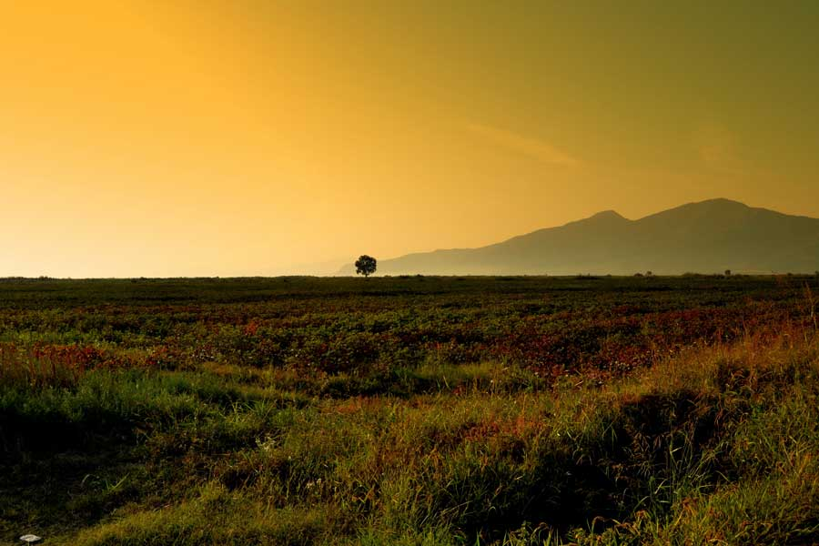 Dilek yarımadası, Büyük Menderes Deltası Milli Parkı Aydın - lonely tree in the middle of infinity, Dilek Peninsula National Park Turkey Aegean region