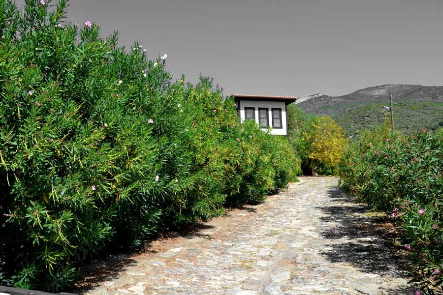 Doğanbey köyü Dilek yarımadası Büyük Menderes Deltası Milli Parkı, Ege bölgesi - Doganbey village, Dilek Peninsula National Park, Aegean region Turkey