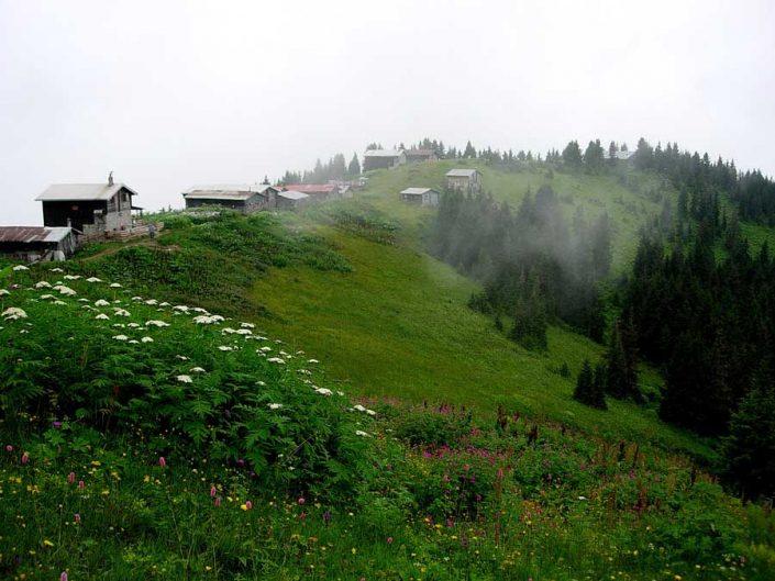 Pokut yaylası tarihi evleri fotoğrafları - when the fog meets the pines, Pokut plateau