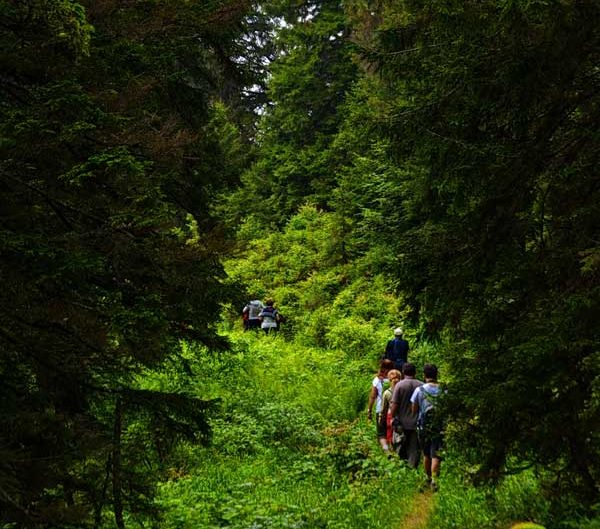 Pokut yaylası yürüme yolu - when the fog meets the pines, Pokut plateau