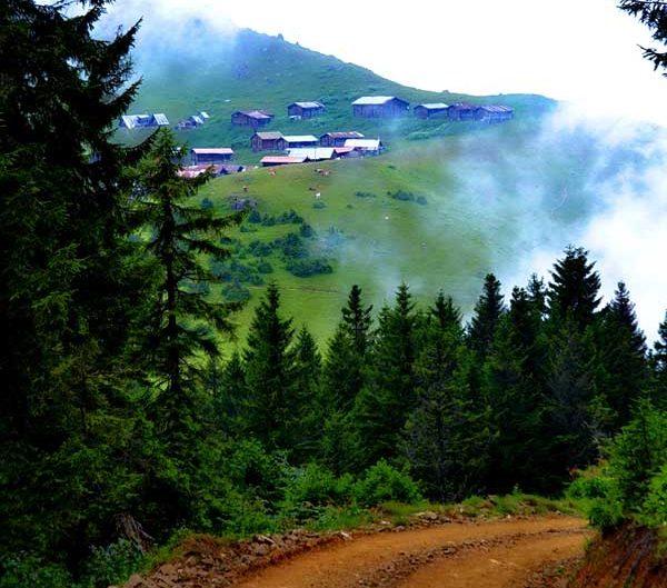 Pokut yaylası yolu fotoğrafları - Pokut plateau photos